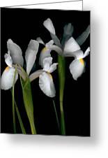 Flying Irises 2 Greeting Card
