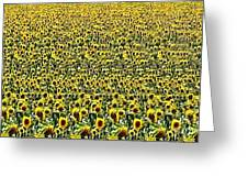 Flying Over Sunflower Fields Greeting Card