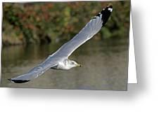 Flying Sea Gull - Eugene Oregon Greeting Card
