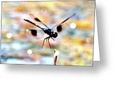 Flying Sparkler Greeting Card