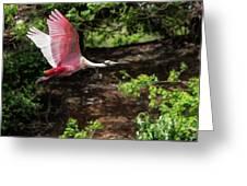 Flying Spoonbill Greeting Card