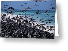 Flying Terns  On The Great Barrier Reef Greeting Card