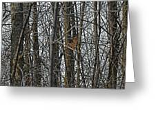 Flying Through The Trees Of The Forest Greeting Card