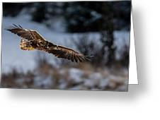 Flying White-tailed Eagle Greeting Card