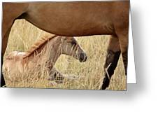 Foal And Mare In A Saskatchewan Pasture Greeting Card