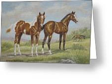 Foals In Pasture Greeting Card
