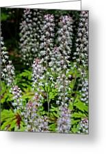 Foam Flower Tiarella Cordifolia Greeting Card