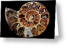 Fossil Greeting Card