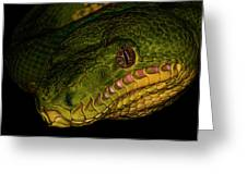 Focus - A Close Look At An Emerald Boa Constrictor Greeting Card