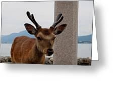 Focus Deer Greeting Card