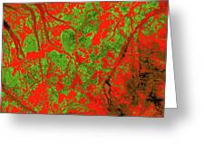 Focus Of Attention 21 Greeting Card