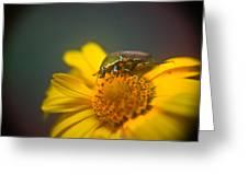 Focused June Beetle Greeting Card