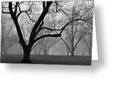Fog 2 Greeting Card by Beverly Hammond