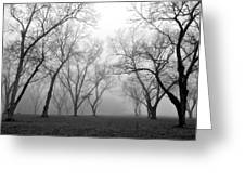 Fog 3 Greeting Card by Beverly Hammond