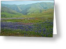 Fog And Wildflowers At Bear Mountain Greeting Card