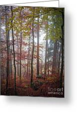 Fog In Autumn Forest Greeting Card