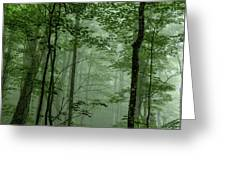 Fog In The Forest Greeting Card