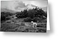 Fog In The Organ Mountains Greeting Card