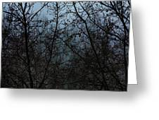 Fog In The Trees Greeting Card