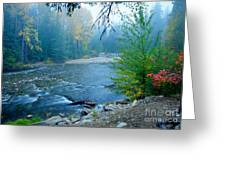 Fog In The Wenatchee Forest Greeting Card