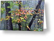 Foggy Fall Forest Greeting Card