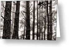 Foggy Forest Greeting Card