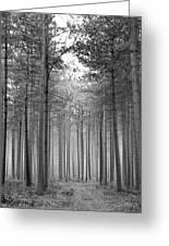 Foggy Forest Greeting Card