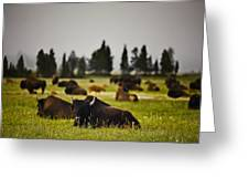 Foggy Herd Greeting Card