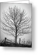 Foggy Lone Tree Hill Fine Art Greeting Card
