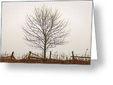 Foggy Lone Tree Hill Greeting Card