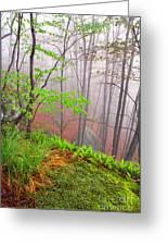 Foggy Misty Spring Morning Greeting Card