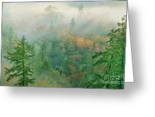 Foggy Morning In Humbolt County California Greeting Card