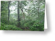Foggy Morning In The Woods Greeting Card