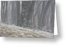 Foggy Moss Greeting Card