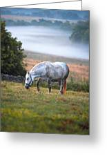 Foggy Pasture Greeting Card