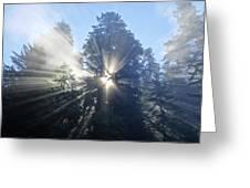 Foggy Redwood Sunrise Greeting Card