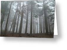 Foggy Sequoia National Park Greeting Card