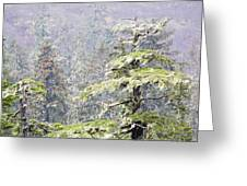 Foggy Tongass Rain Forest Greeting Card