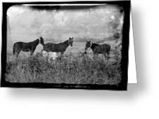 Horse Trio In Morning Fog Greeting Card