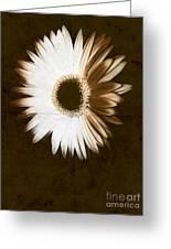 Folded Daisy Greeting Card