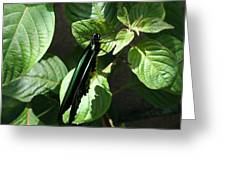 Folded Up - Green And Black Butterfly Greeting Card