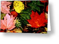 Foliage Closeup Greeting Card