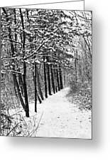 Follow The Snowy Trail Greeting Card