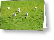 Following The Leader Greeting Card