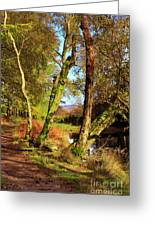 Footpath At The Edge Of Lantys Tarn In The Lake District Cumbria Greeting Card