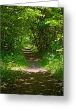 Footpath Lined With Hazel. Greeting Card