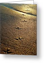 Footprints - Bird Greeting Card