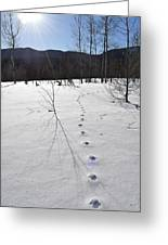 Footprints In The Snow Greeting Card