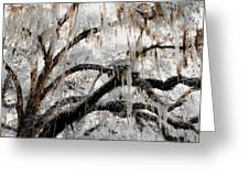 For The Grace Of The Beauty Of A Aged Tree Greeting Card