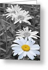 For The Love Of Daisy Greeting Card
